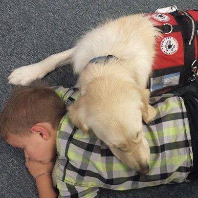 stryder and service dog